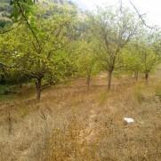 Χώροι για εκδρομή Αγελών Λυκοπούλων δίπλα στο ποτάμι.